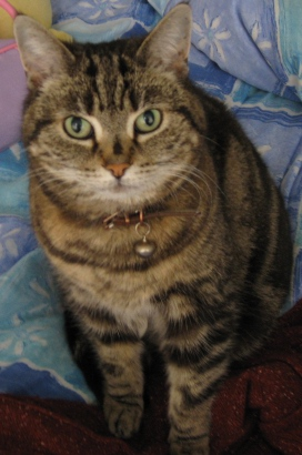 Picture of Minnie the Tabby Cat - Missing